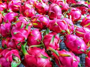 Pitahaya Rosada Finca Happy Fruit