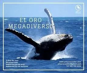 El Oro Megadiverso All Sur Ecuador