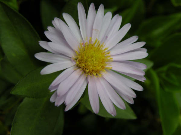 Flower of the garden