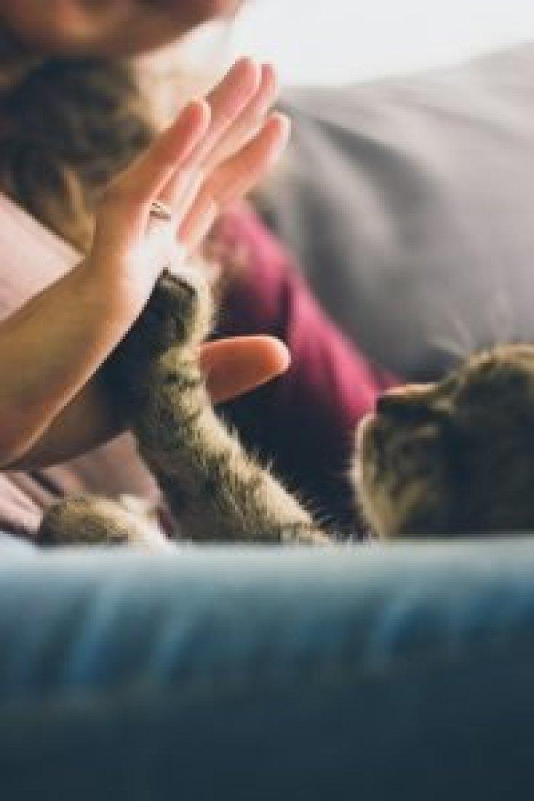 Cómo adaptar tu casa para mascotas y para ti