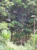 Area Cacao, Cativo, near Manuel's house