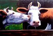 cow-kiss-2