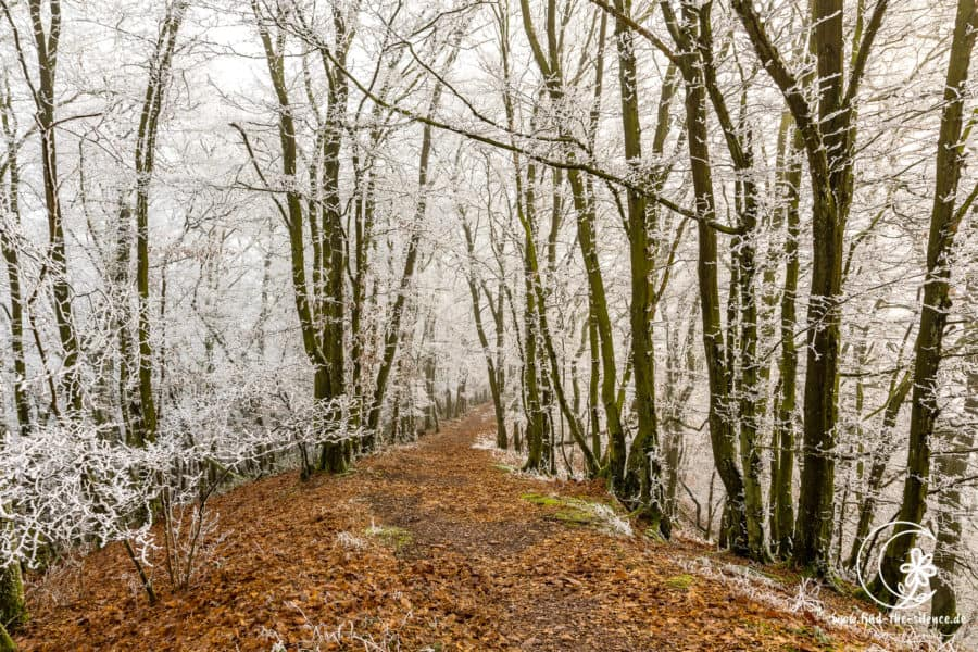This is also the Moselsteig - in winter. Since days only fog was visible and it was so cold that it froze. Unfortunately it was much darker, like in the picture, therefore not so beautiful - nevertheless a great natural spectacle!