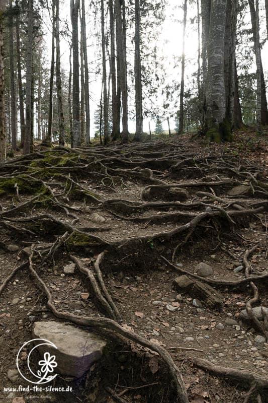 Die steilste Stelle des Aufstiegs