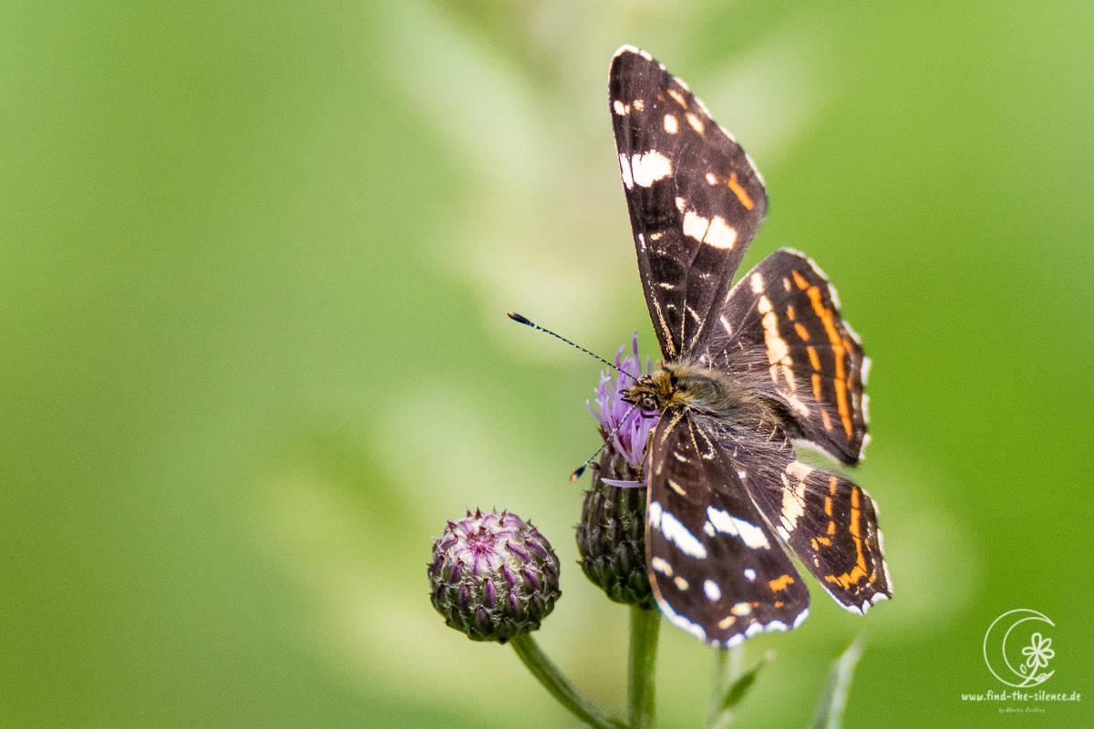 Landkärtchen (map butterfly)
