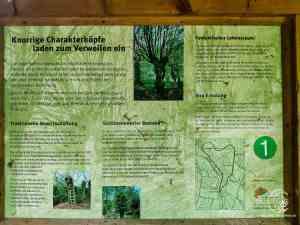 Infotafel am Hainbuchenweg im Hainbuchenwald Gieboldehausen