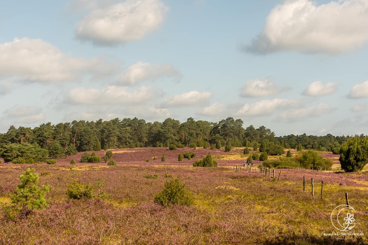 Geocaching Wanderung durchs Naturschutzgebiet während der Heideblüte