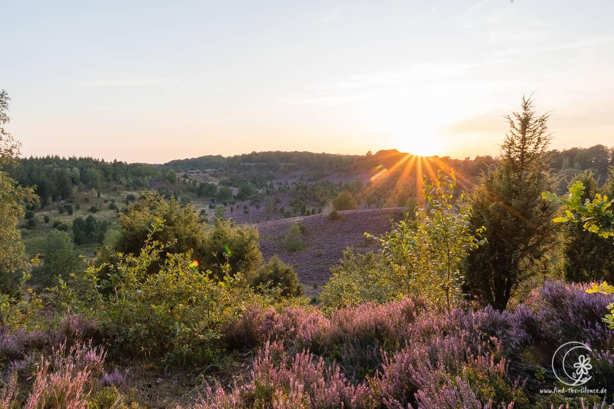 Sonnenuntergang am Totengrund im Naturschutzgebiet Lüneburger Heide