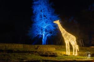 Die Giraffe und ihr Blaubaum