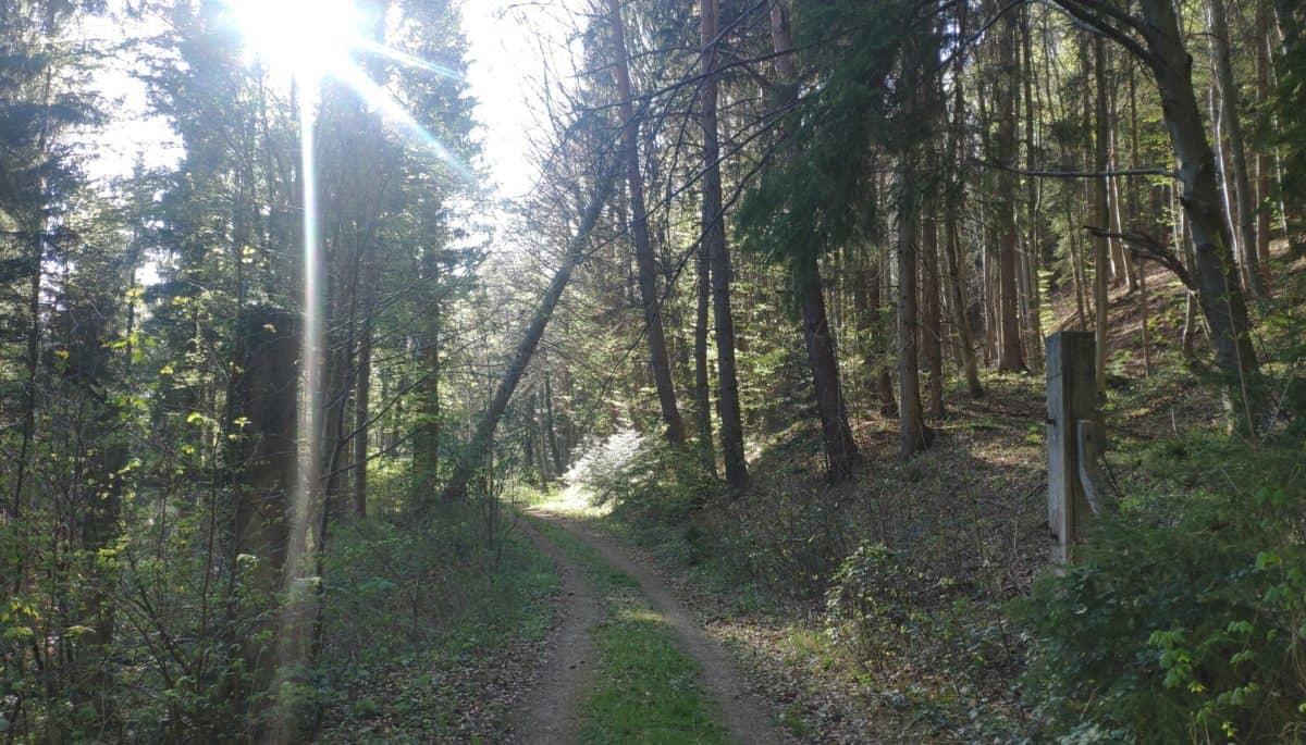 Zaunpfosten - erste Spuren