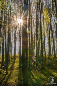 Frühlingsmorgen im Wald