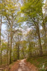 Waldidylle im ersten Teil