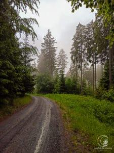 dunkler, einsamer Wald