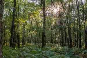 Der Artus-Wald