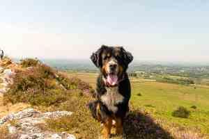 Der höchste Hund der Bretagne