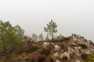 Aussichtsfelsen im Morgennebel - Vor dir: Das Meer