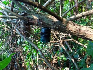 Nano am Baum im Wald