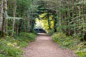 Einsam Parken im Wald