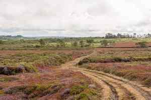 Heidelandschaft auf Crozon