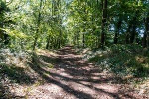 Waldabschnitte spenden Schatten