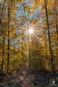 Herbstwald im Kraichgau