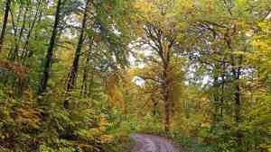 Spaziergang durch den verregneten Herbstwald