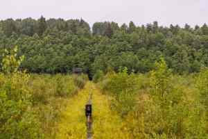 Wandern durch den Sumpf