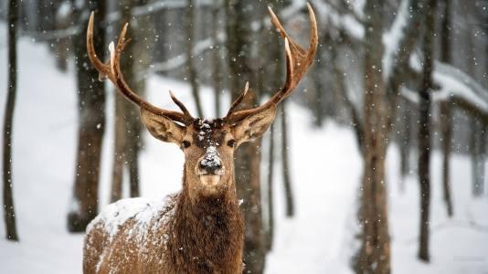 deer-wallpaper-12905-13485-hd-wallpapers