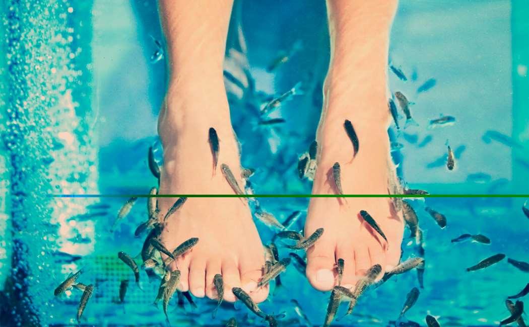 Bad med Garra Rufa Fisk Image