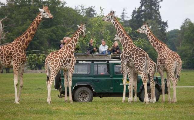 Se giraffen - op til 4 personer Image