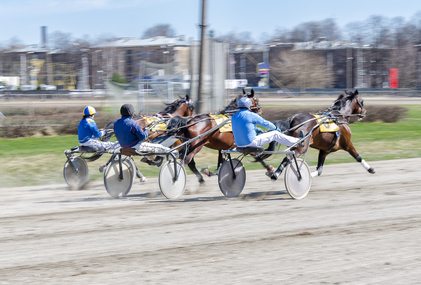 Harness racing. Racing horses harnessed to lightweight strollers.