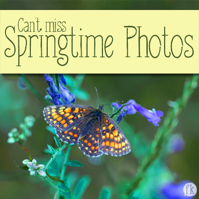 Can't Miss Springtime Photos Featured