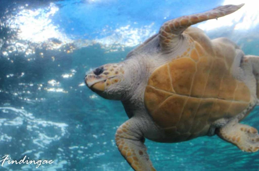turtule in the ocean