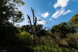 Darnley Trail-5
