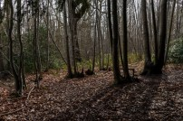 Shorne Woods-11