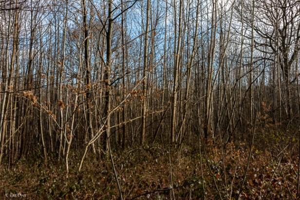Shorne Woods-2