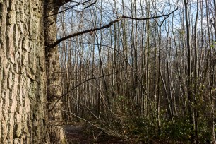Shorne Woods-3