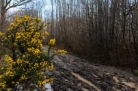 Shorne Woods-8