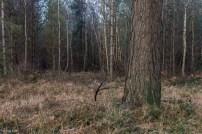 kings-wood-winter-29