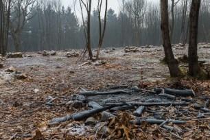 kings-wood-winter-3