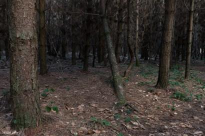kings-wood-winter-6