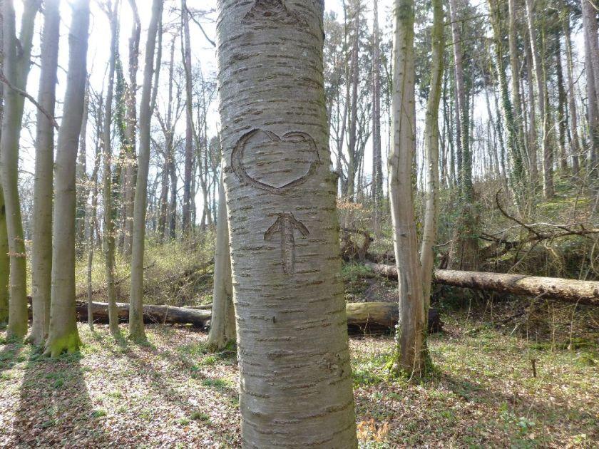 Baum mit Herz Aachen