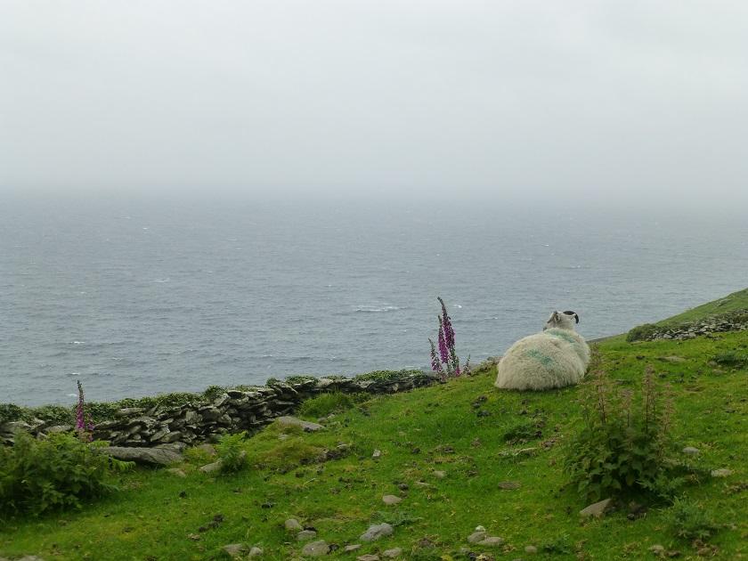 Dingle Way Irland