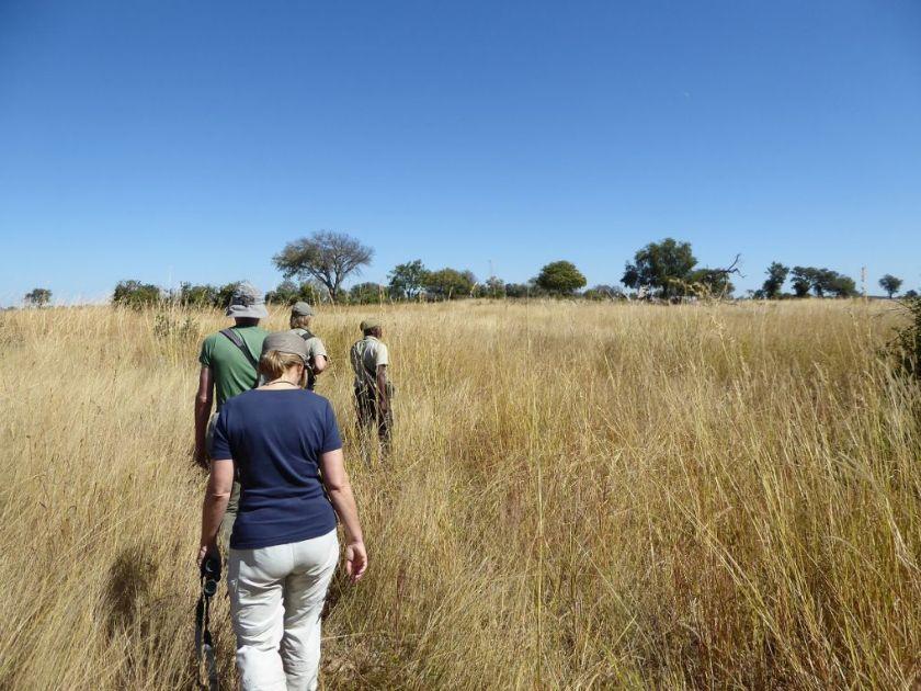 Durchs Gras Pirschen Okavango Delta