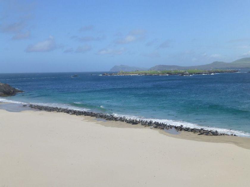 Blasket Island Robben am Strand