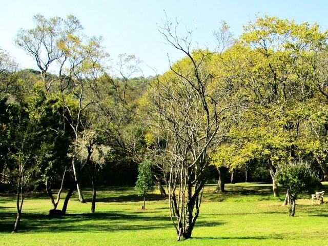 Autumn Trees at Walter Sisulu Botanical Gardens