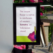 corpse flower sign3