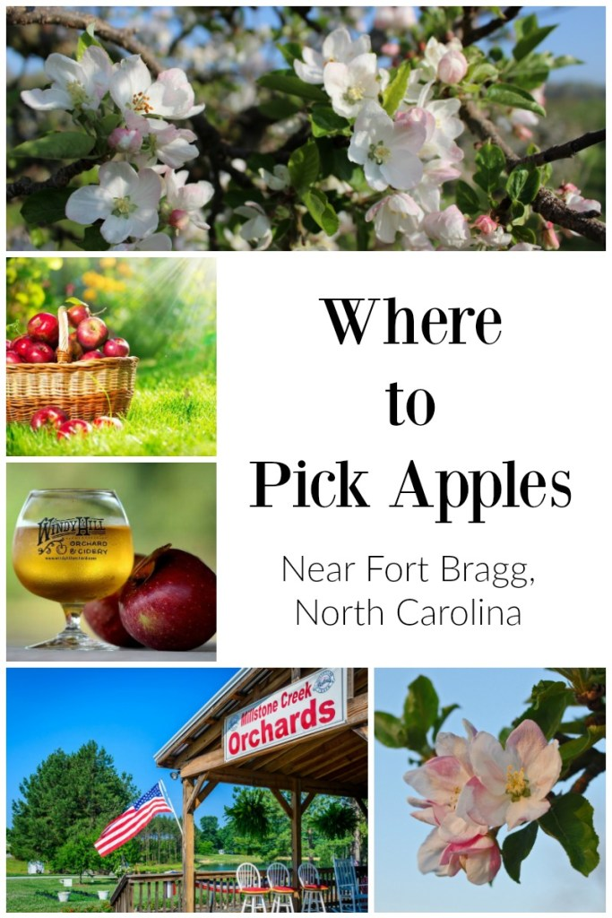 Where to Pick Apples Near Fort Bragg, NC | Finding Mandee