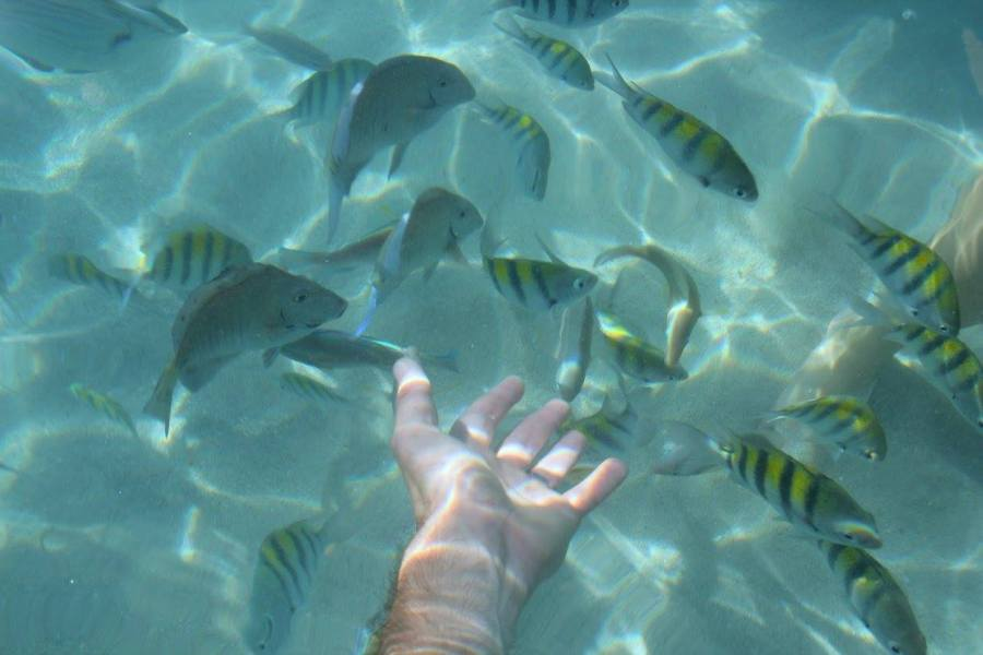 things to do in Roatan swimming