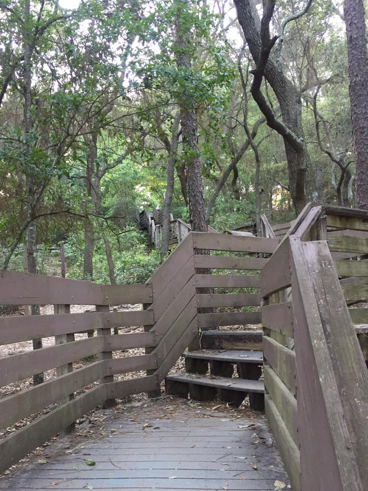 things to do in Pensacola go for a walk at Bay Bluffs Park